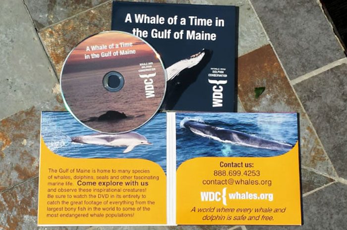 Whale Adoption DVD